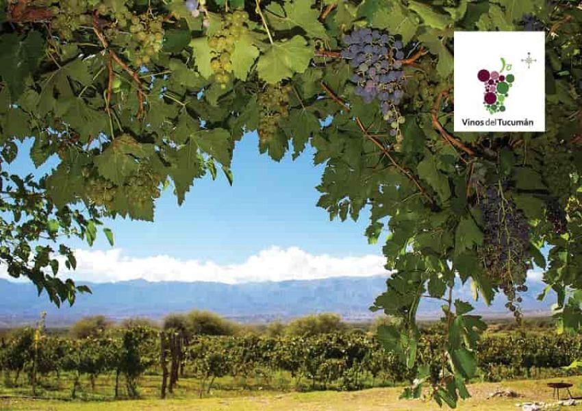 Tucumán también tiene su ruta del vino