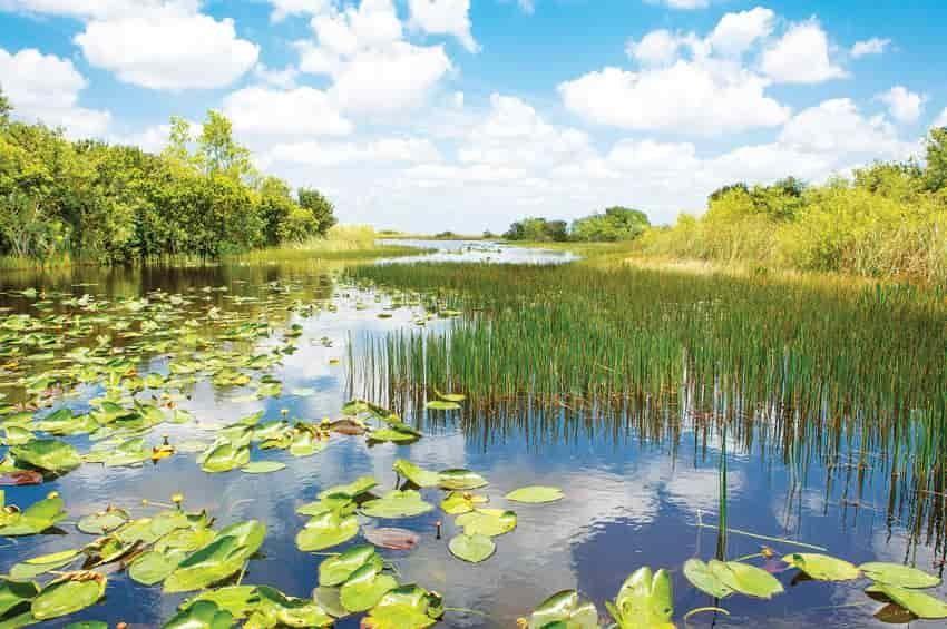 Los humedales, una reserva que debe preservarse